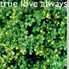TRUE LOVE ALWAYS Spring Collection album